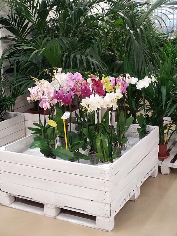 Reparti minelli garden - Cerco piante da giardino in regalo ...