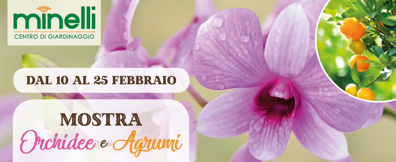 orchidee e agrumi