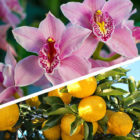 Mostra Orchidee Agrumi